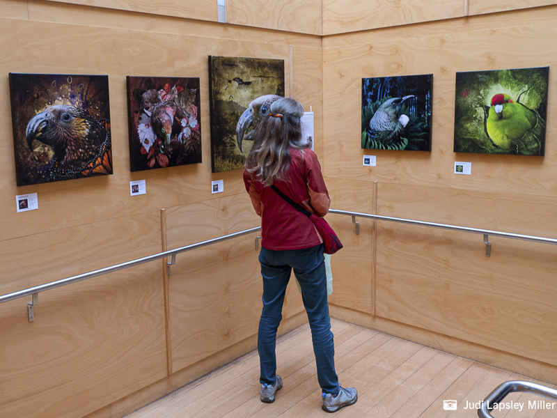A visitor admires bird art by photo-artist Judi Lapsley Miller