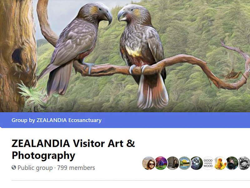 Visitor Art and Photography Facebook group