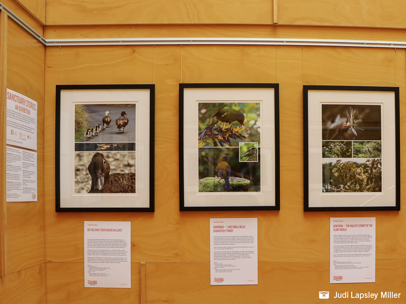 Photo essays about ZEALANDIA wildlife by the Sanctuary Storytellers